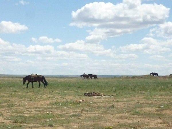 写真07 馬放牧.jpeg